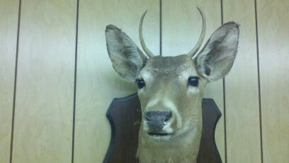 Deer. | Non-living exhibits | Creation Critters | Lakeland