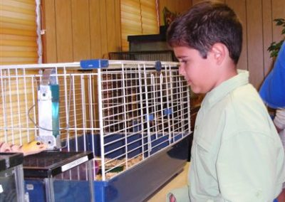 Guinea pigs are cute | Lakeland Christian 5th grade 2008 | Creation Critters | Lakeland