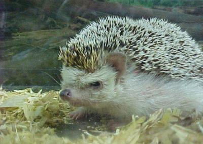 Spike - the hedgehog
