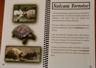 Sulcata Tortoise Page | Creation Critters Book | Creation Critters | Lakeland