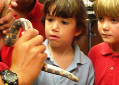 This is a sand Boa | Trinity Christian School | Creation Critters | Lakeland